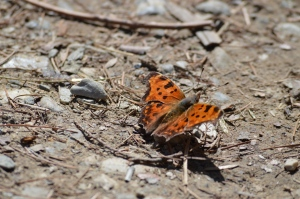 Butterfly at Linville Falls