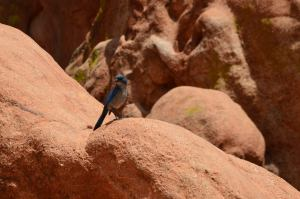 Our brilliantly-colored company in Garden of the Gods