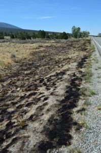 A portion of the burned road-side just south of the Great Sand Dunes National Park