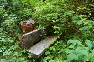 Bench in Staircase, Olympic National Park