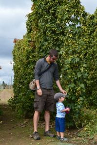 At the Rogue Brewery Hop Farm