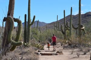 Hiking in Saguaro National Park, Arizona